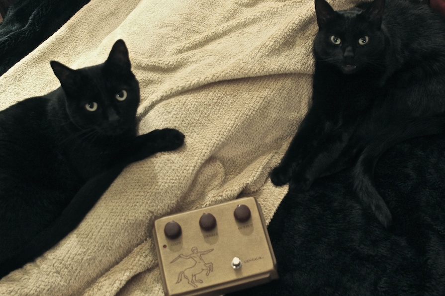 Opaque cats love transparent overdrive!