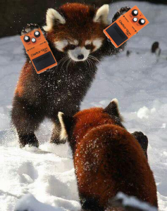 """Hi! We're red pandas, and we inspired the guitar's color scheme!"""