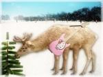 hello_mutant_reindeer