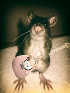 rat_kitty