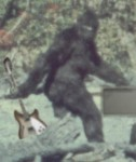 Digitally enhanced versions of the 1967 Patterson-Gimlin footage prove that Bigfoot used flatwounds.